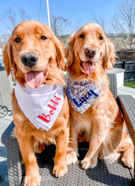 Lucy and Bobbi, two golden retrievers, the hosts of Everyday Akron for the week of May 9, 2021